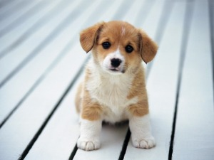 Puppy_2